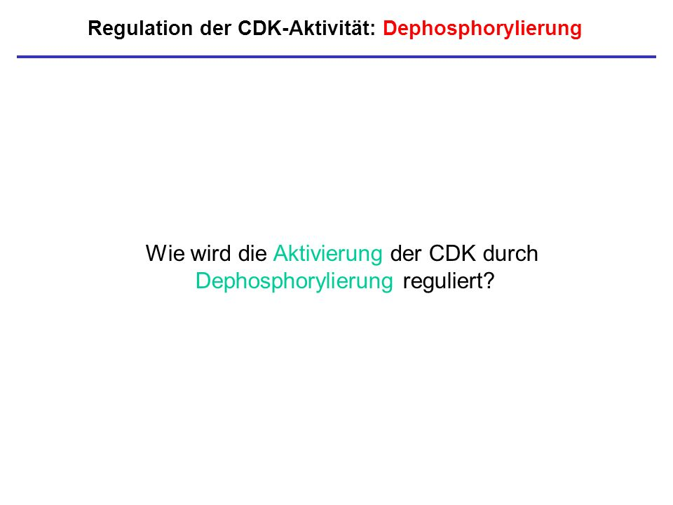 Regulation der CDK-Aktivität: Dephosphorylierung