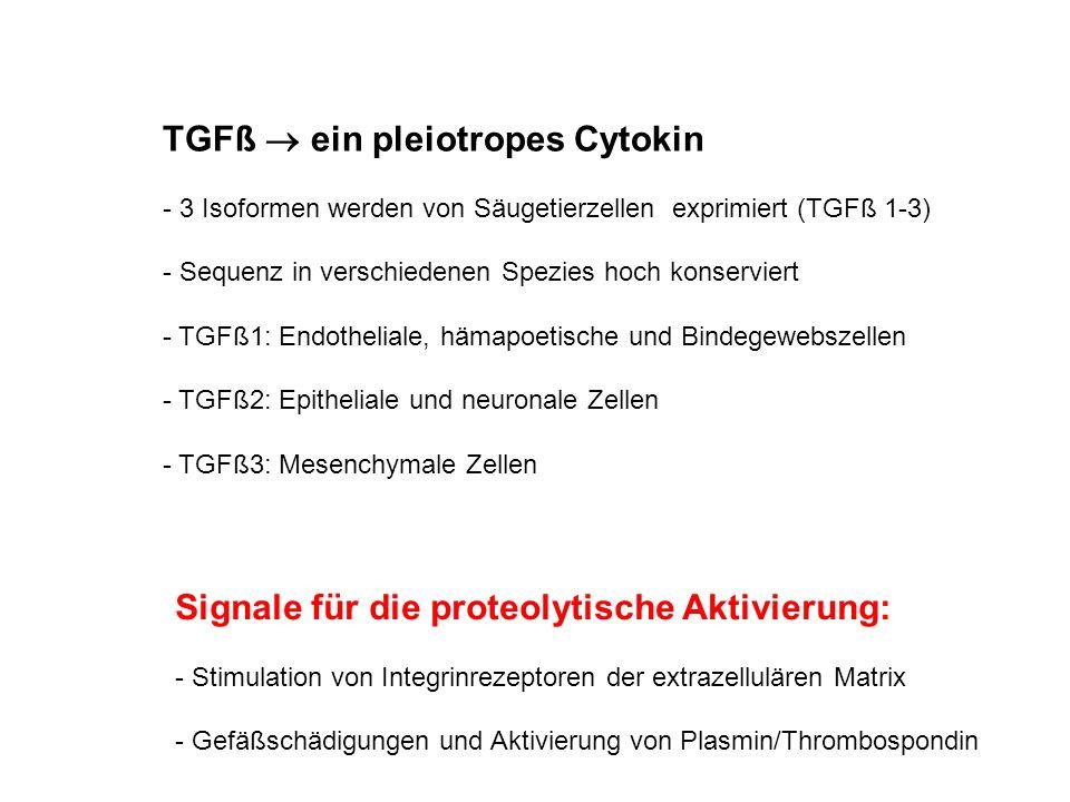TGFß  ein pleiotropes Cytokin