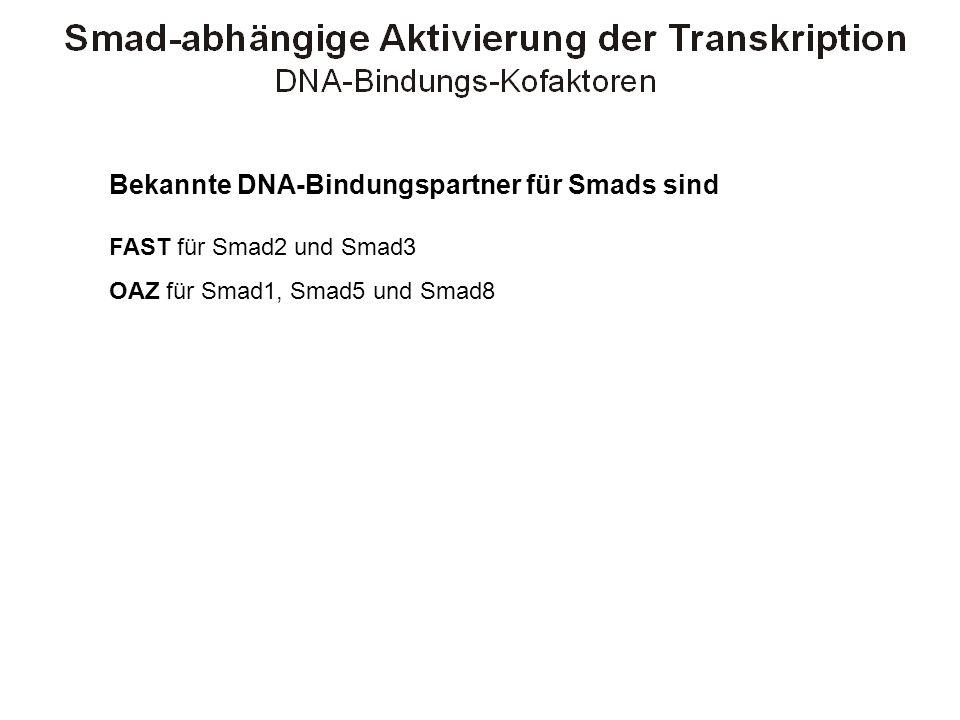 Bekannte DNA-Bindungspartner für Smads sind