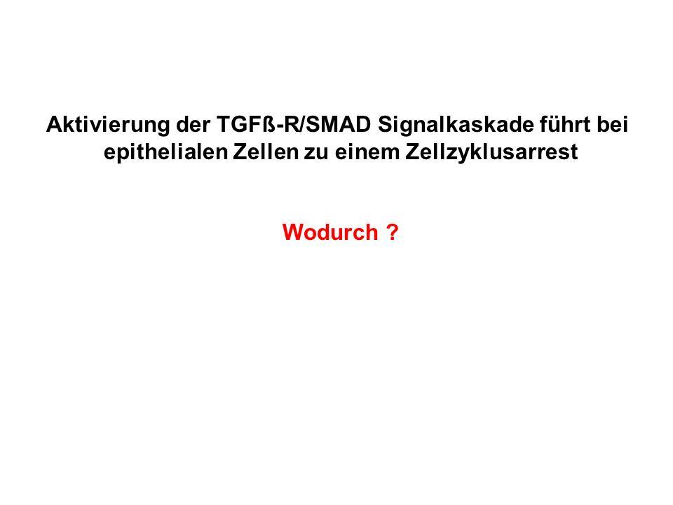 Aktivierung der TGFß-R/SMAD Signalkaskade führt bei