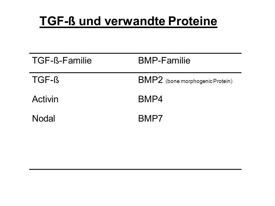 TGF-ß und verwandte Proteine