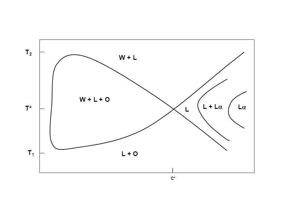 T2 W + L W + L + O T* L + L L L T1 L + O C*