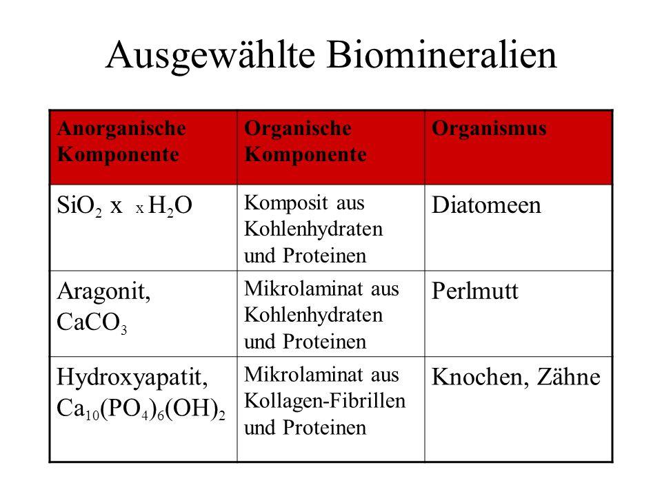 Ausgewählte Biomineralien