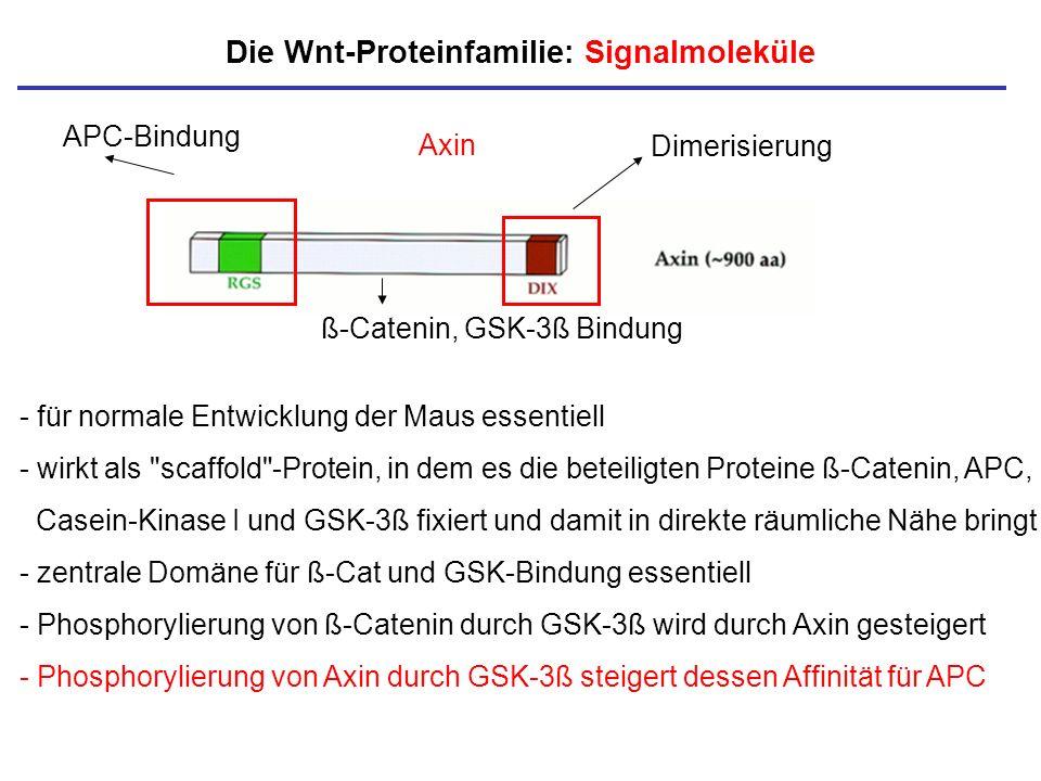Die Wnt-Proteinfamilie: Signalmoleküle