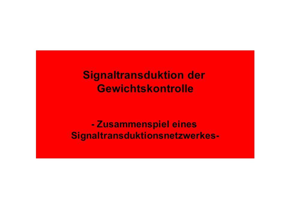 Signaltransduktion der Signaltransduktionsnetzwerkes-