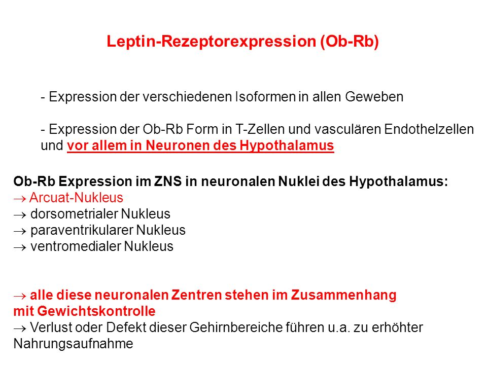Leptin-Rezeptorexpression (Ob-Rb)