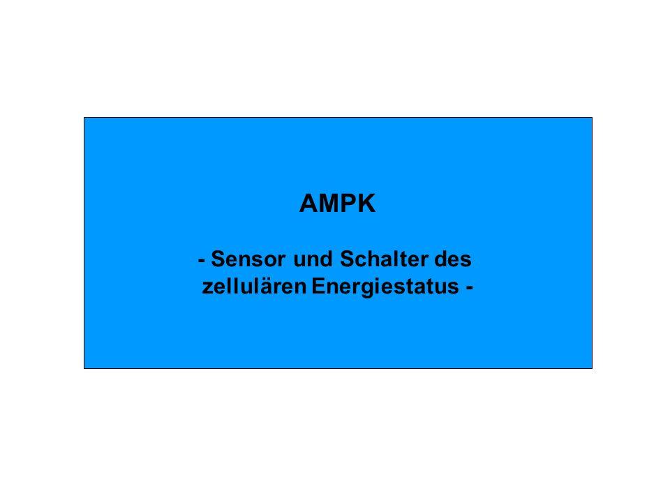 - Sensor und Schalter des zellulären Energiestatus -
