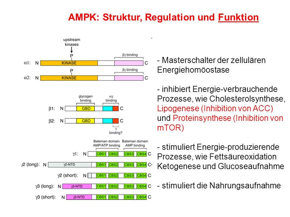 AMPK: Struktur, Regulation und Funktion