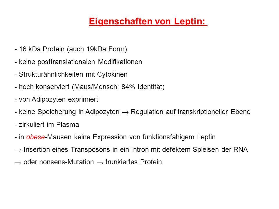 Eigenschaften von Leptin: