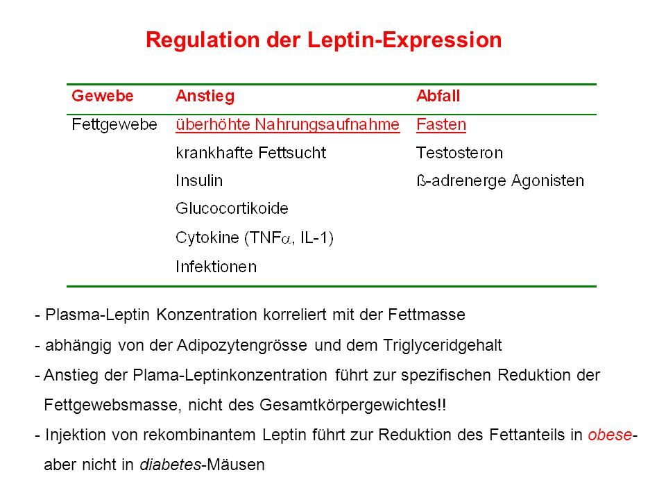 Regulation der Leptin-Expression