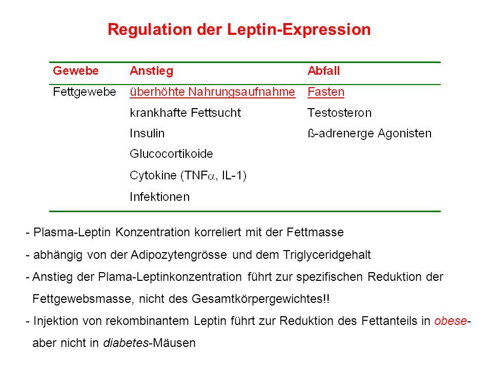 Regulation der Leptin-Expression