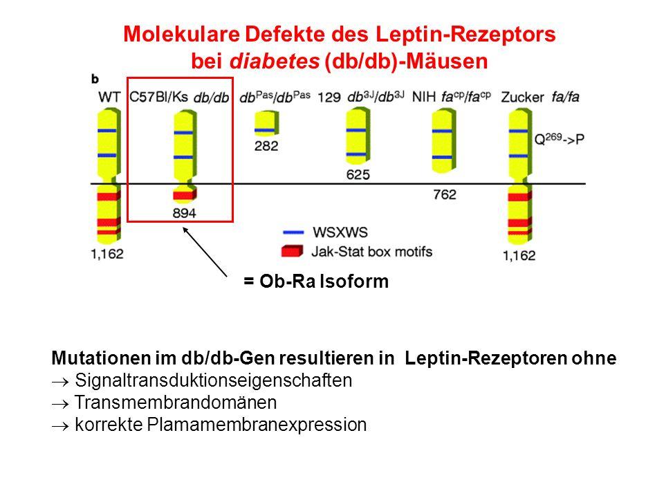 Molekulare Defekte des Leptin-Rezeptors