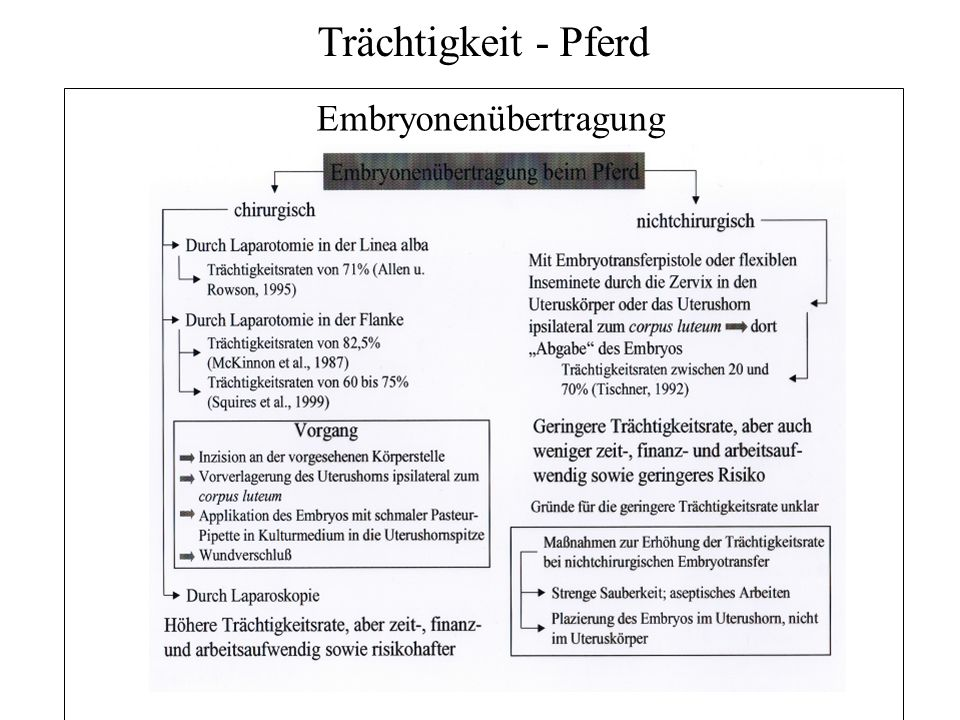Embryonenübertragung