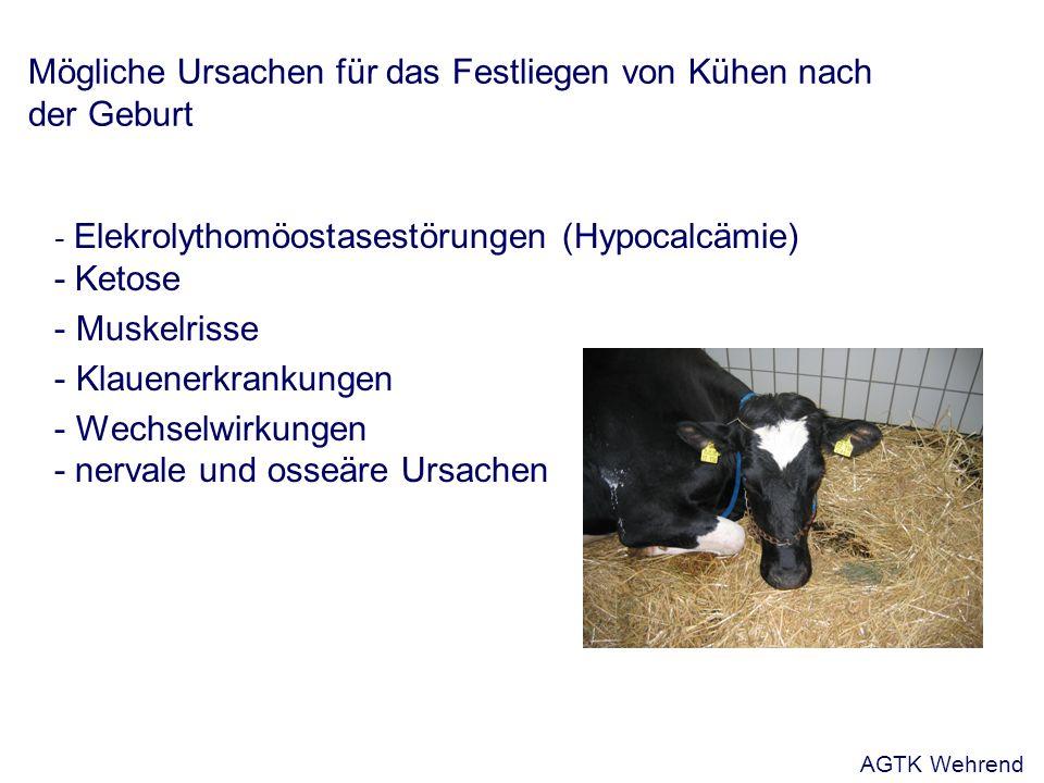 Mögliche Ursachen für das Festliegen von Kühen nach der Geburt
