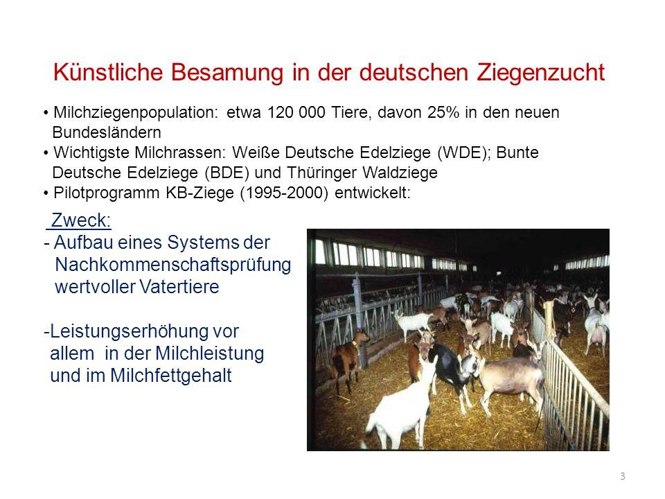 Künstliche Besamung in der deutschen Ziegenzucht