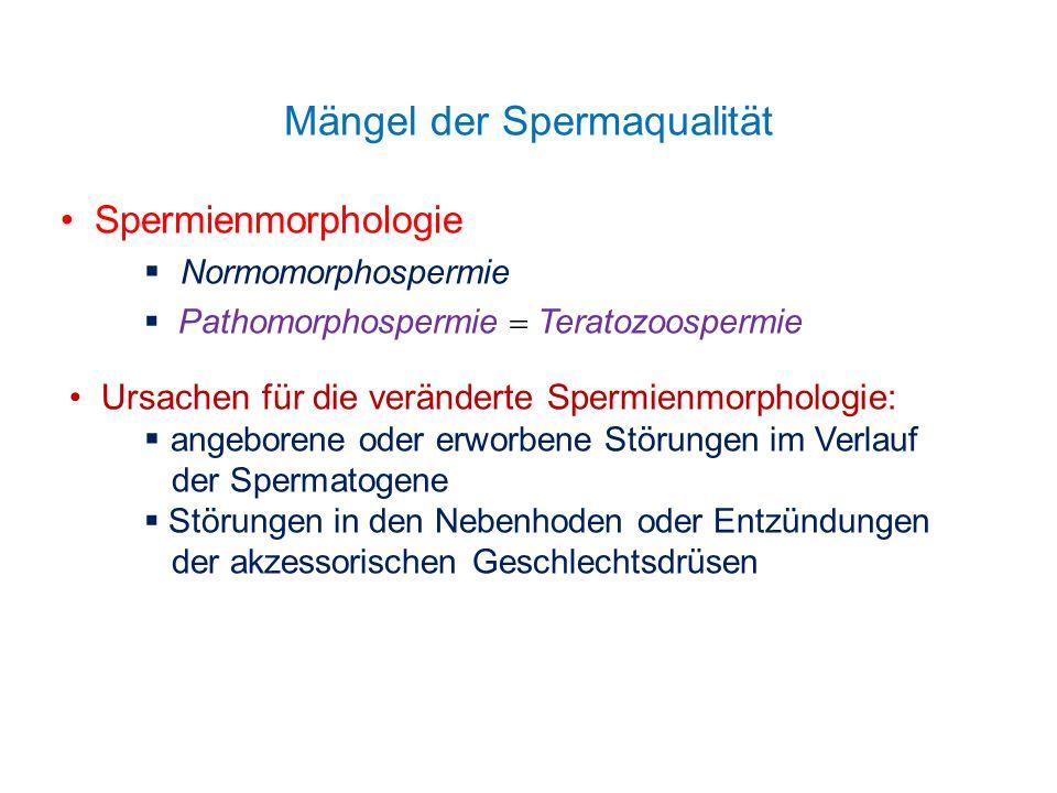 Mängel der Spermaqualität