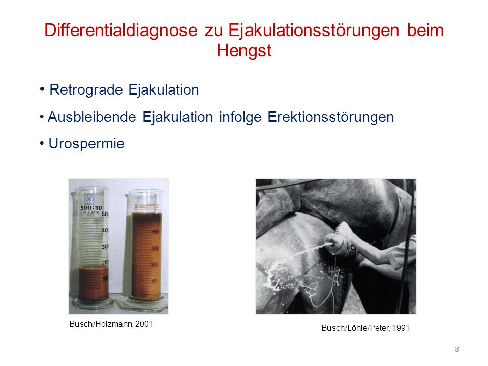 Differentialdiagnose zu Ejakulationsstörungen beim Hengst