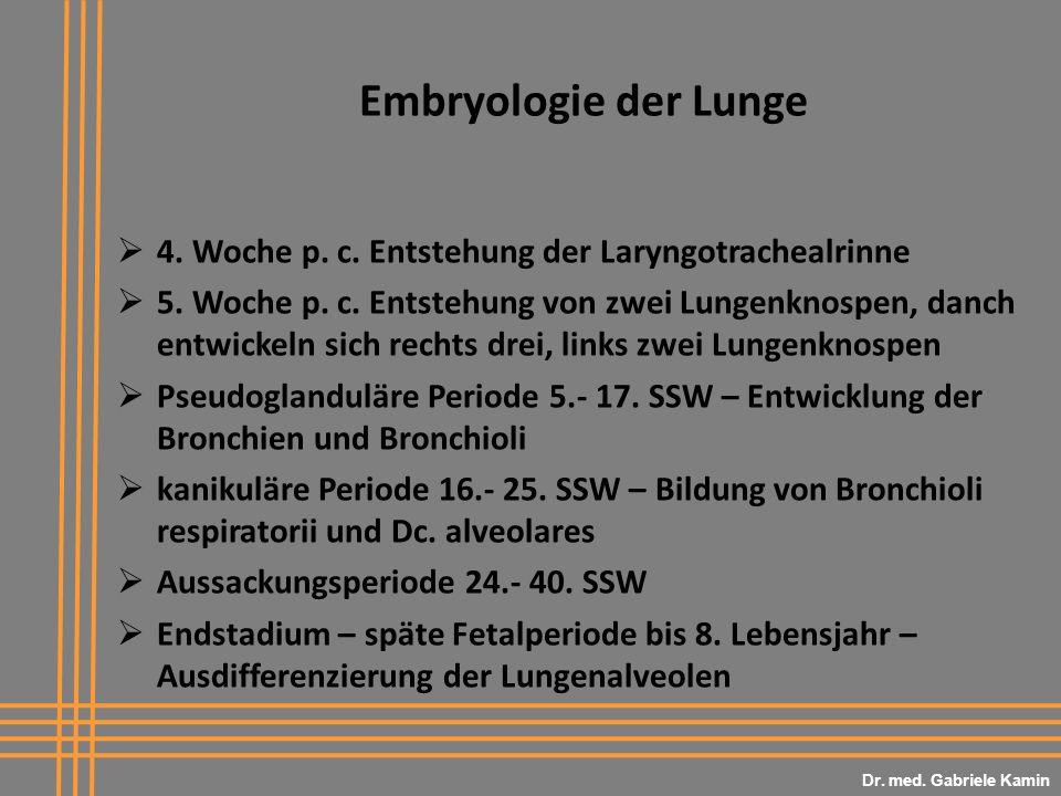 Dr. med. Gabriele Kamin Embryologie der Lunge. 4. Woche p. c. Entstehung der Laryngotrachealrinne.