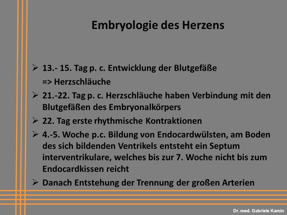 Embryologie des Herzens