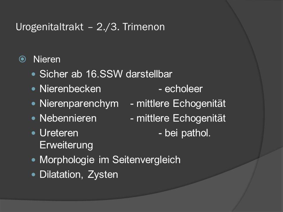Urogenitaltrakt – 2./3. Trimenon