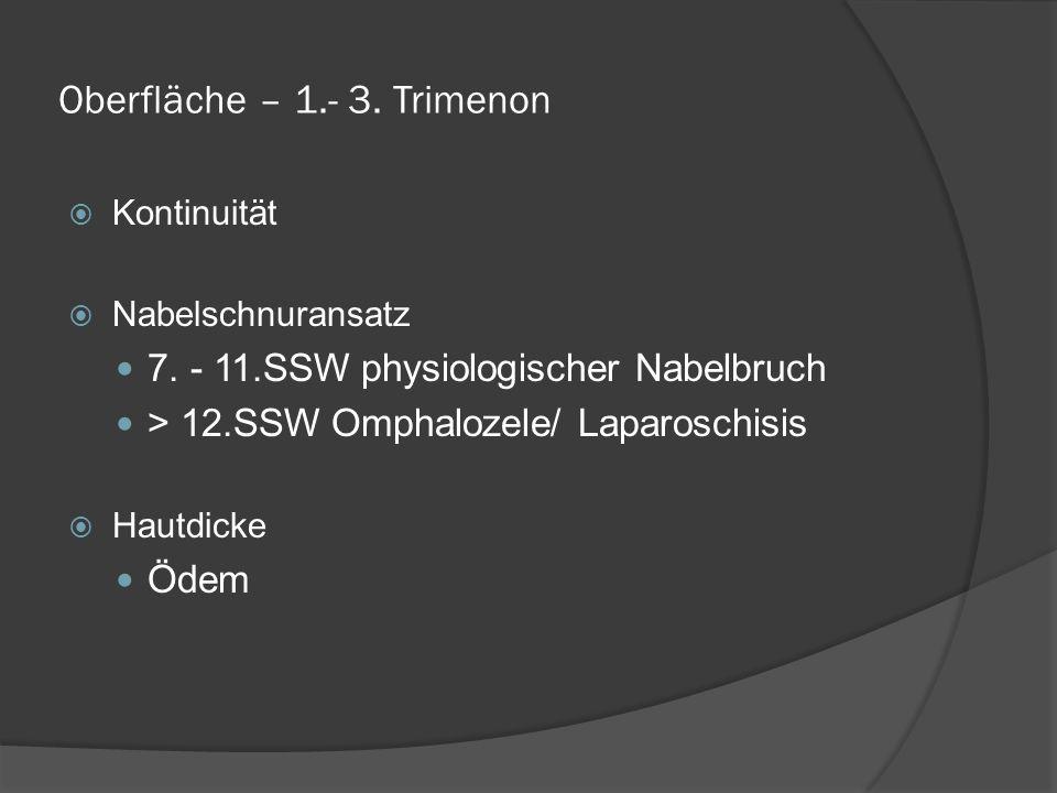 Oberfläche – 1.- 3. Trimenon