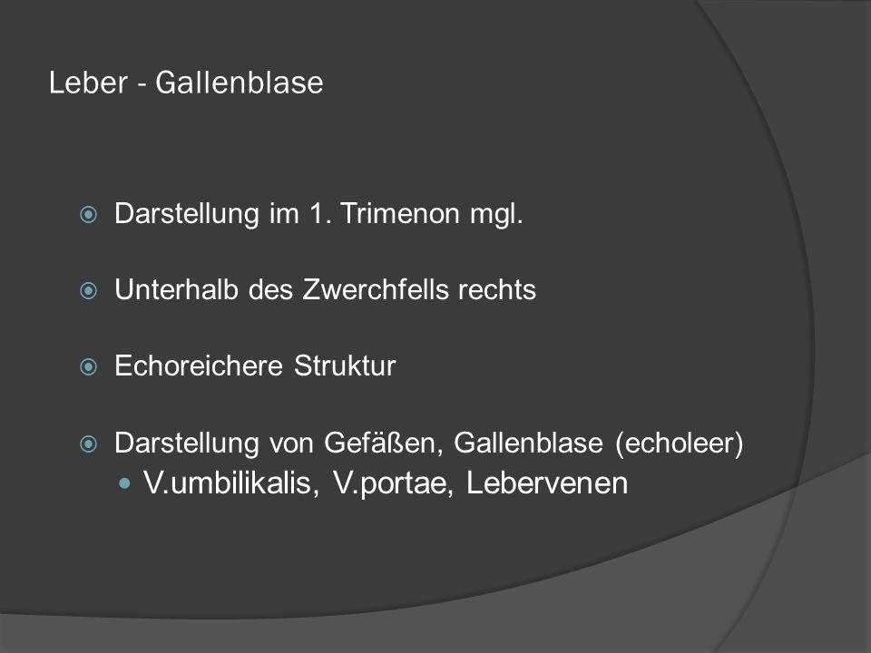 Leber - Gallenblase V.umbilikalis, V.portae, Lebervenen