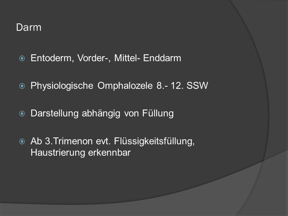 Darm Entoderm, Vorder-, Mittel- Enddarm