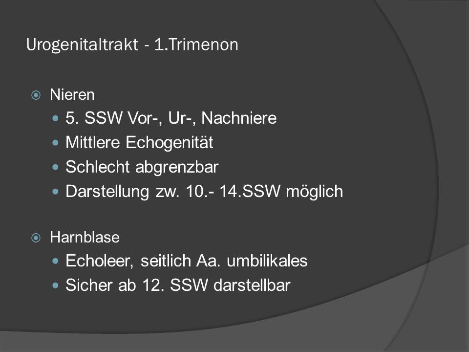Urogenitaltrakt - 1.Trimenon