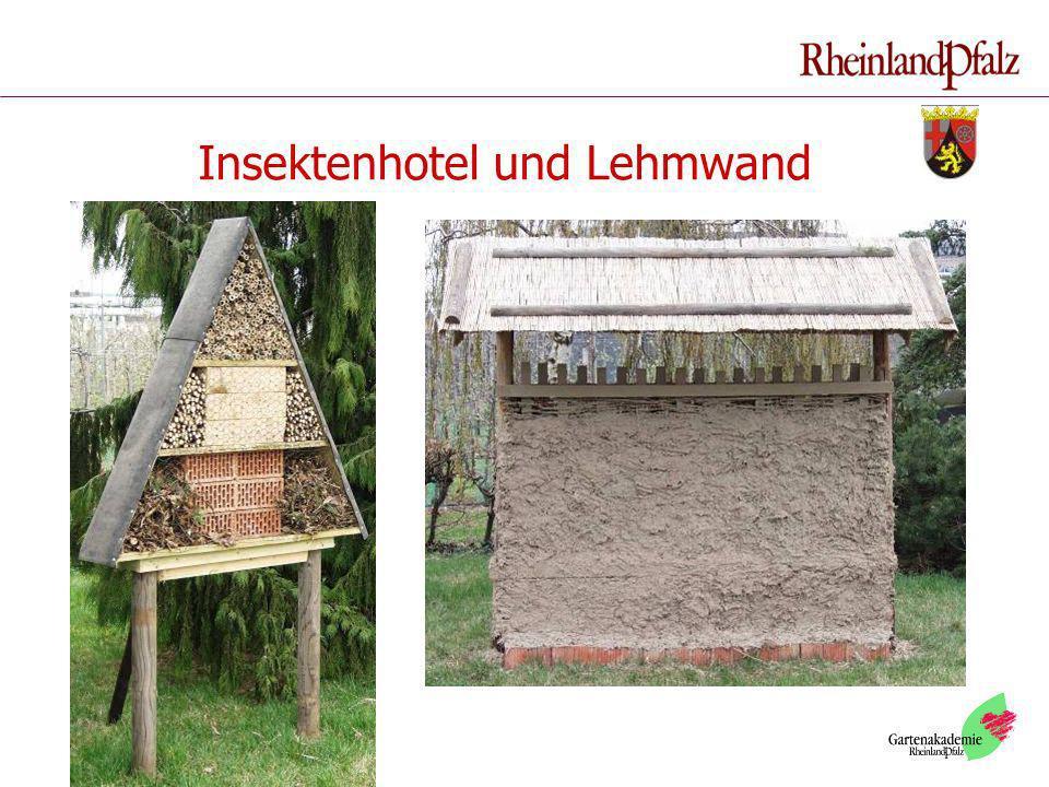 Insektenhotel und Lehmwand