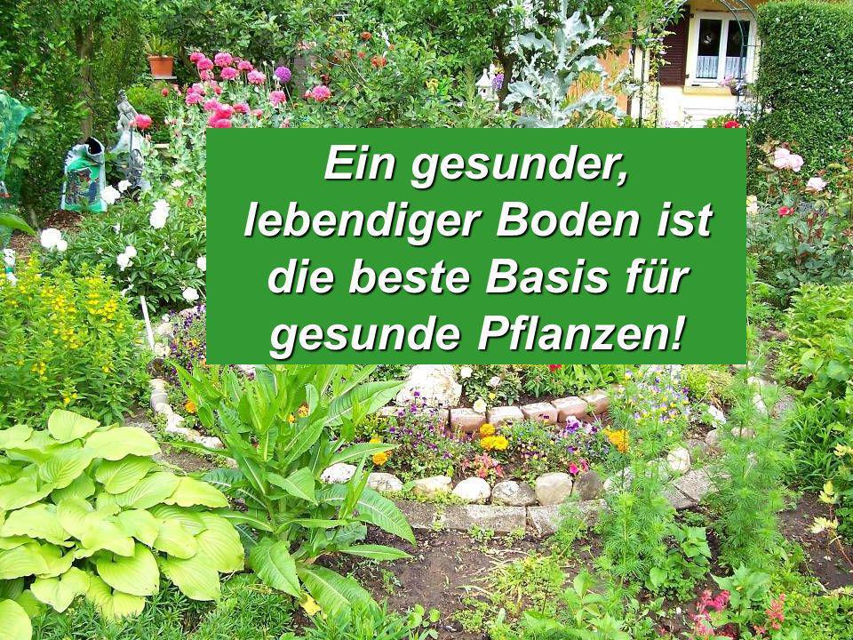 Ein gesunder, lebendiger Boden ist die beste Basis für gesunde Pflanzen!