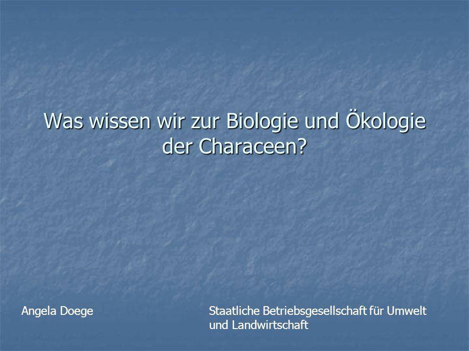 Was wissen wir zur Biologie und Ökologie der Characeen