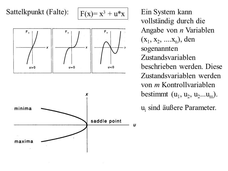 Sattelkpunkt (Falte):