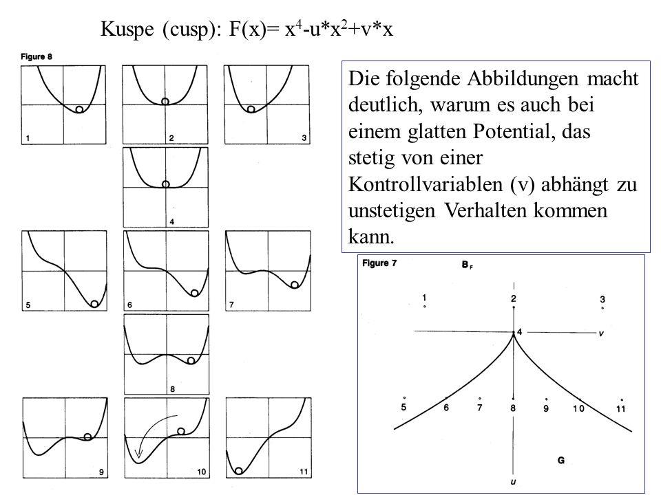 Kuspe (cusp): F(x)= x4-u*x2+v*x