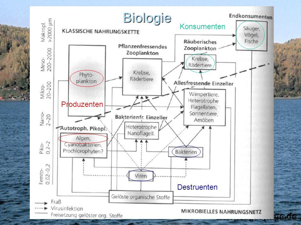 Biologie Konsumenten Produzenten Destruenten