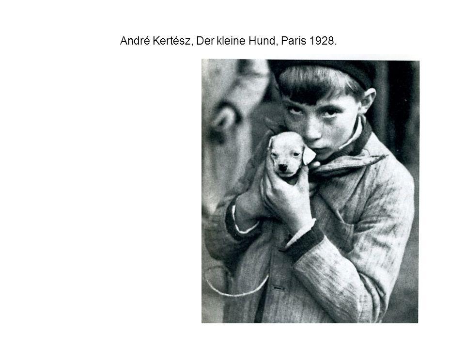 André Kertész, Der kleine Hund, Paris 1928.