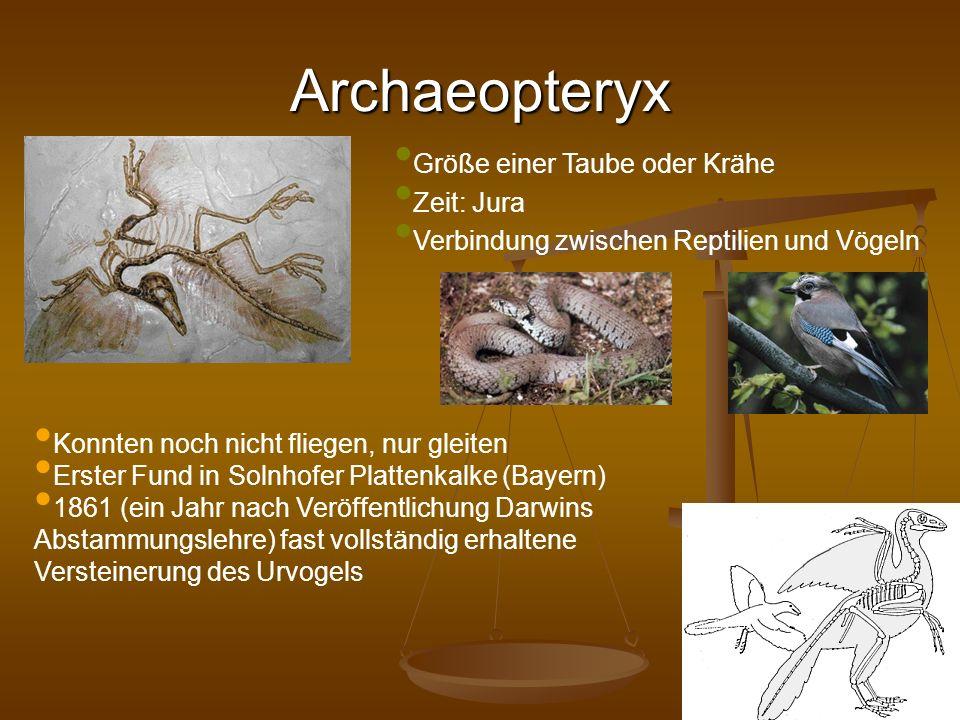 Archaeopteryx Größe einer Taube oder Krähe Zeit: Jura