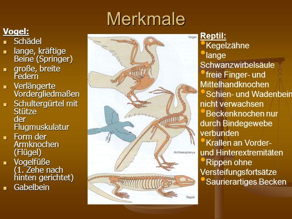 Merkmale Vogel: Reptil: Schädel Kegelzähne