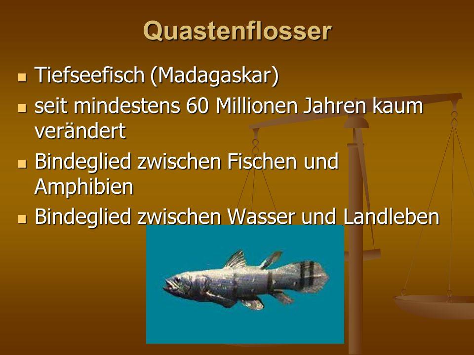Quastenflosser Tiefseefisch (Madagaskar)