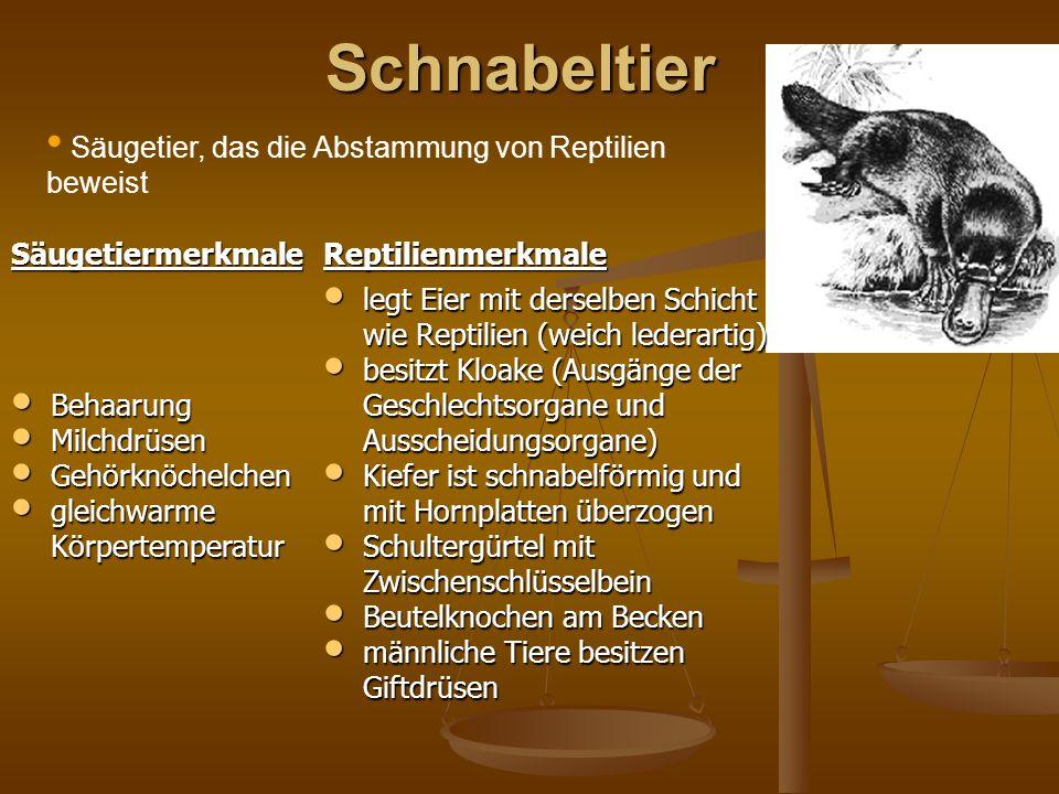 Großzügig Anatomie Eines Schnabeltier Bilder - Anatomie Von ...