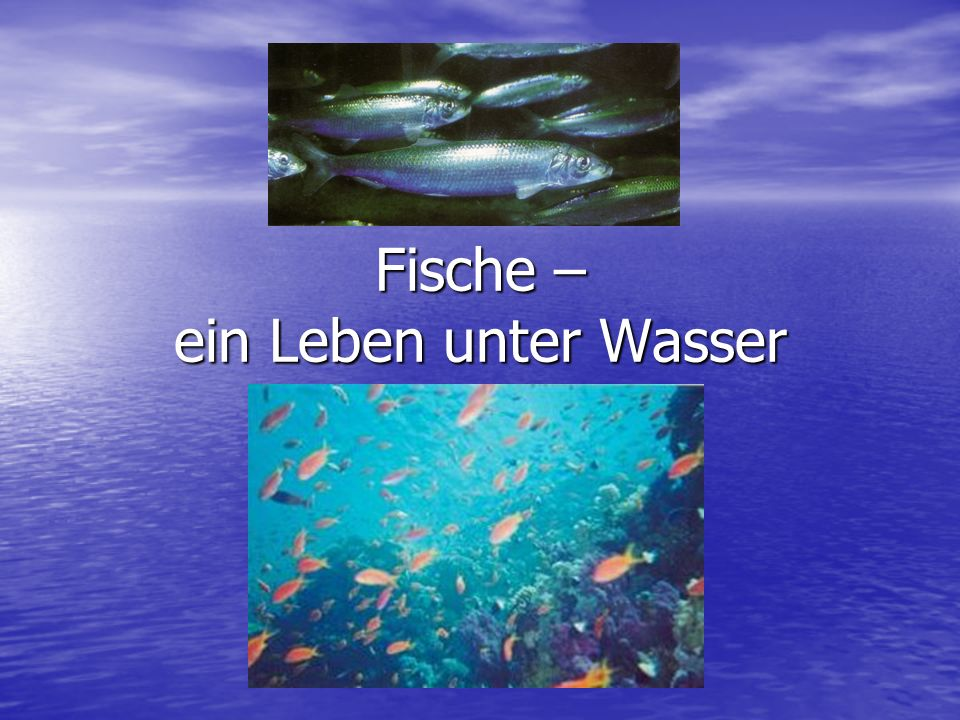 Fische – ein Leben unter Wasser