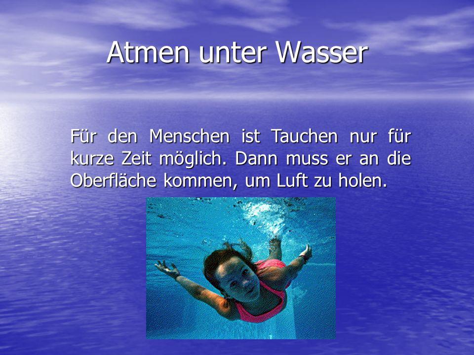 Atmen unter Wasser Für den Menschen ist Tauchen nur für kurze Zeit möglich.