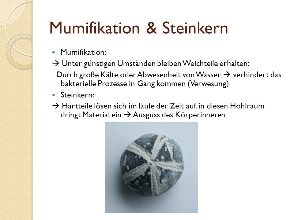 Mumifikation & Steinkern