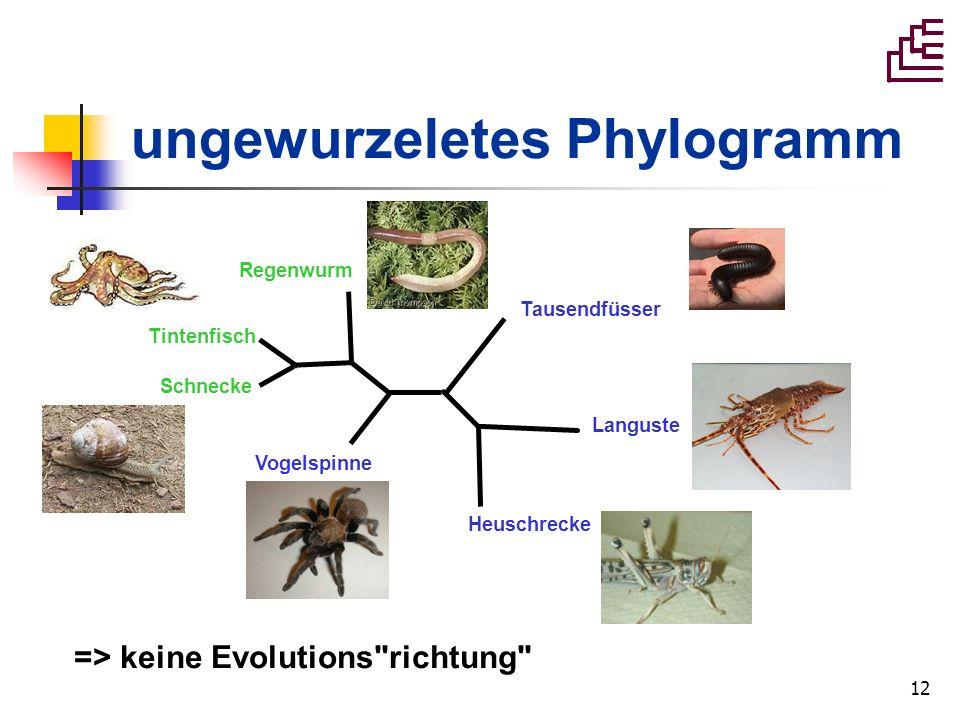 ungewurzeletes Phylogramm