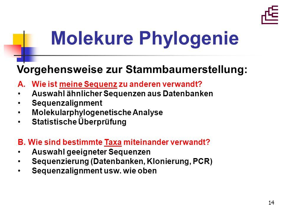 Molekure Phylogenie Vorgehensweise zur Stammbaumerstellung: