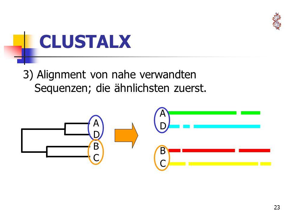 CLUSTALX 3) Alignment von nahe verwandten Sequenzen; die ähnlichsten zuerst. B C A D A D B C