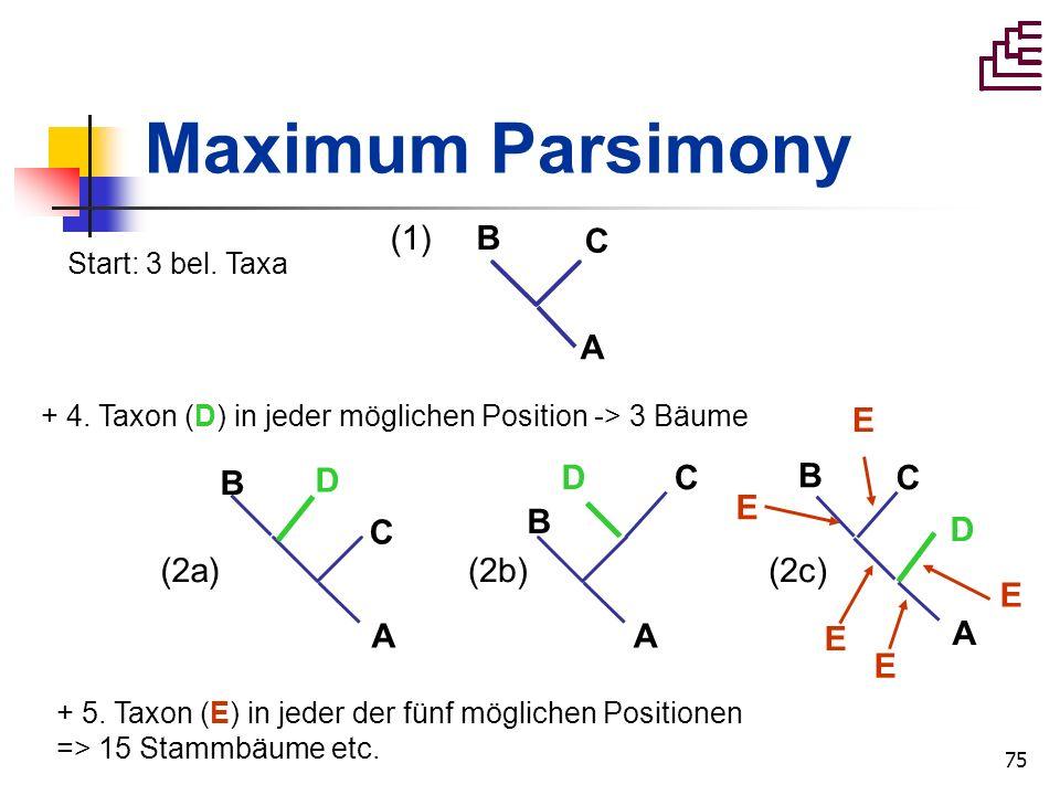 Maximum Parsimony (1) B C A (2a) A B D C (2b) (2c) E