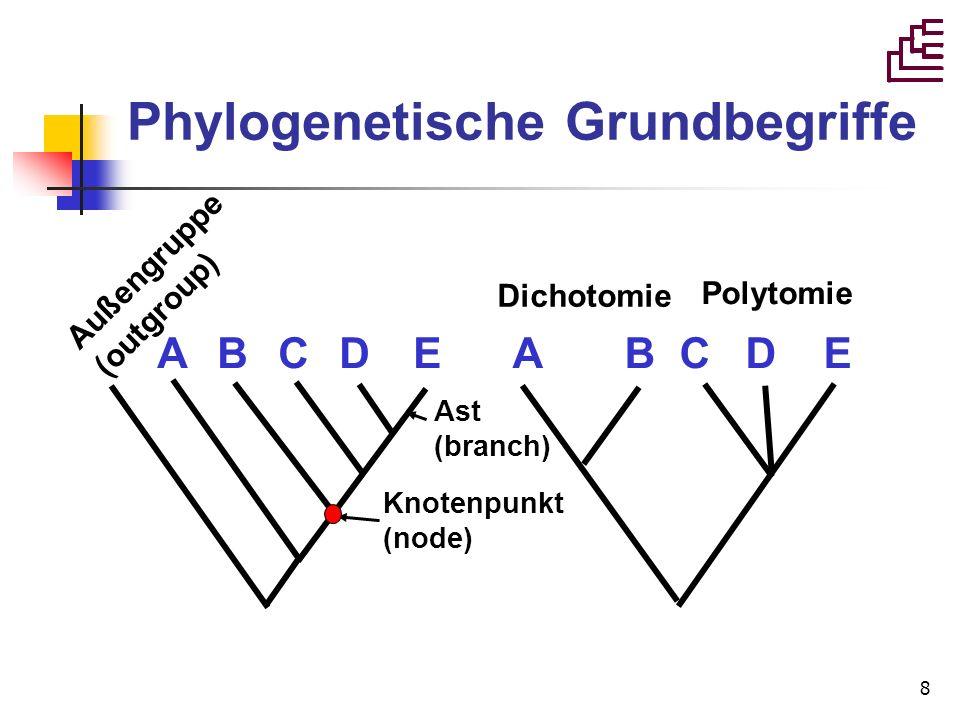 Phylogenetische Grundbegriffe