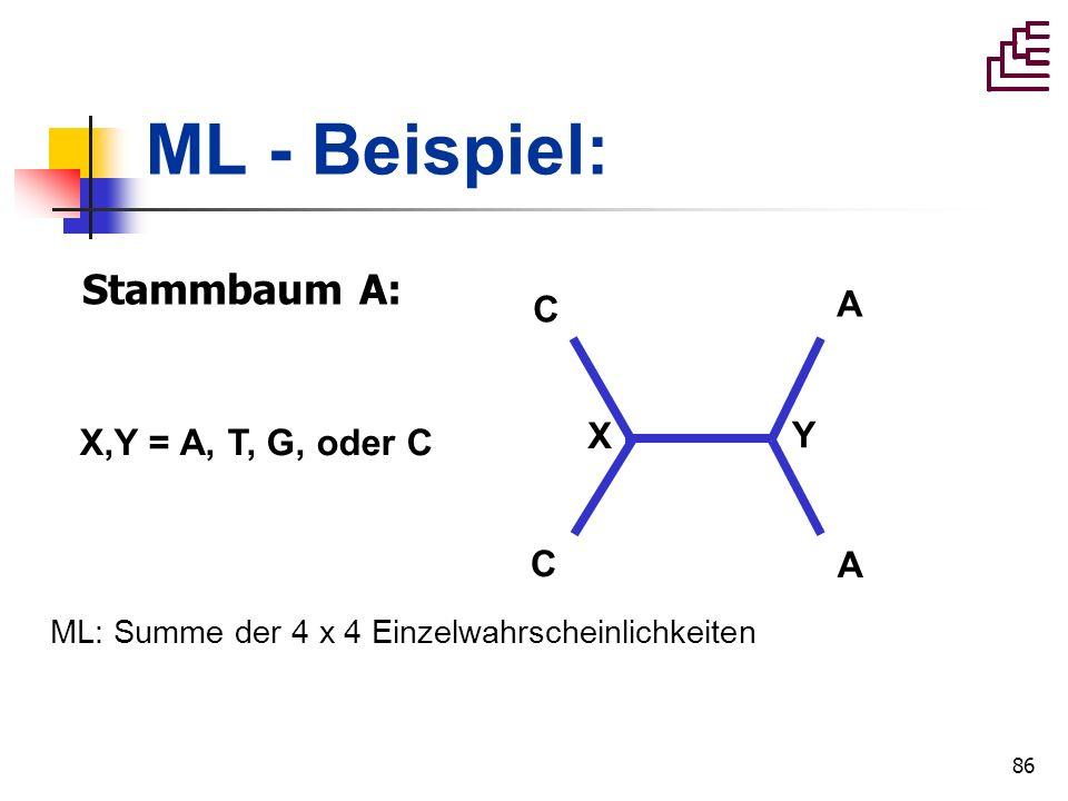 ML - Beispiel: Stammbaum A: A C X,Y = A, T, G, oder C X Y C A