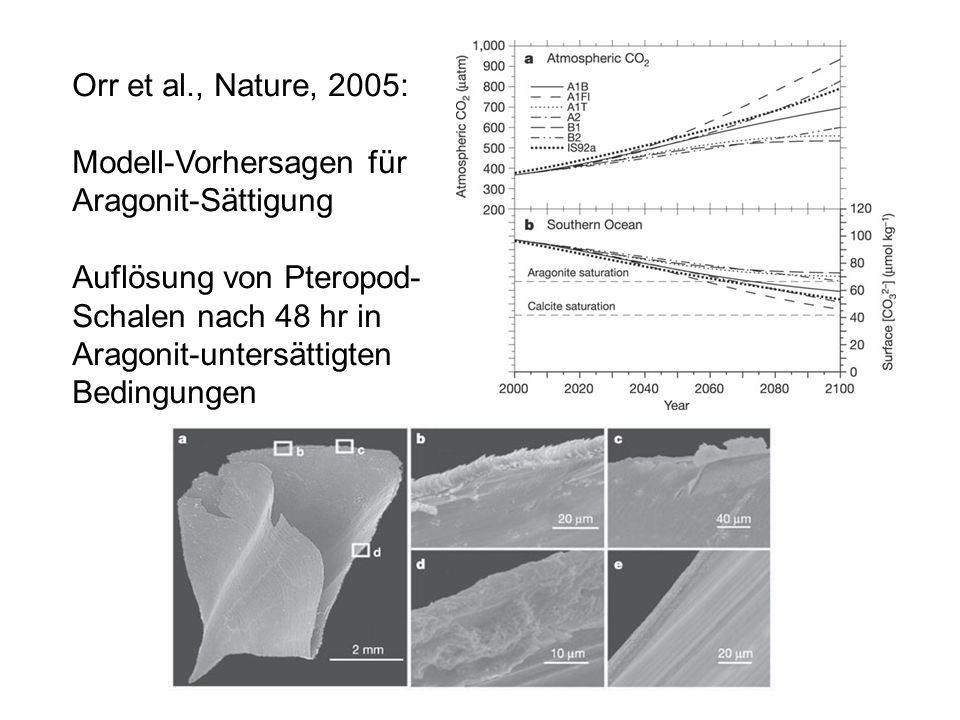 Orr et al., Nature, 2005: Modell-Vorhersagen für. Aragonit-Sättigung. Auflösung von Pteropod- Schalen nach 48 hr in.