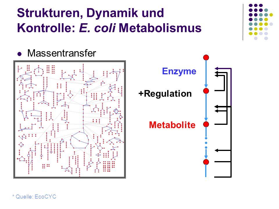 Strukturen, Dynamik und Kontrolle: E. coli Metabolismus